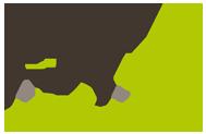 il magnifico insite realizza siti web e-commerce professionali a Roma Centro, Acilia, AXA, Casal Palocco e in Italia